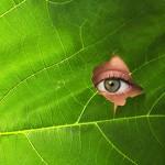 Eine Auge blickt durch ein Loch in einem Blatt